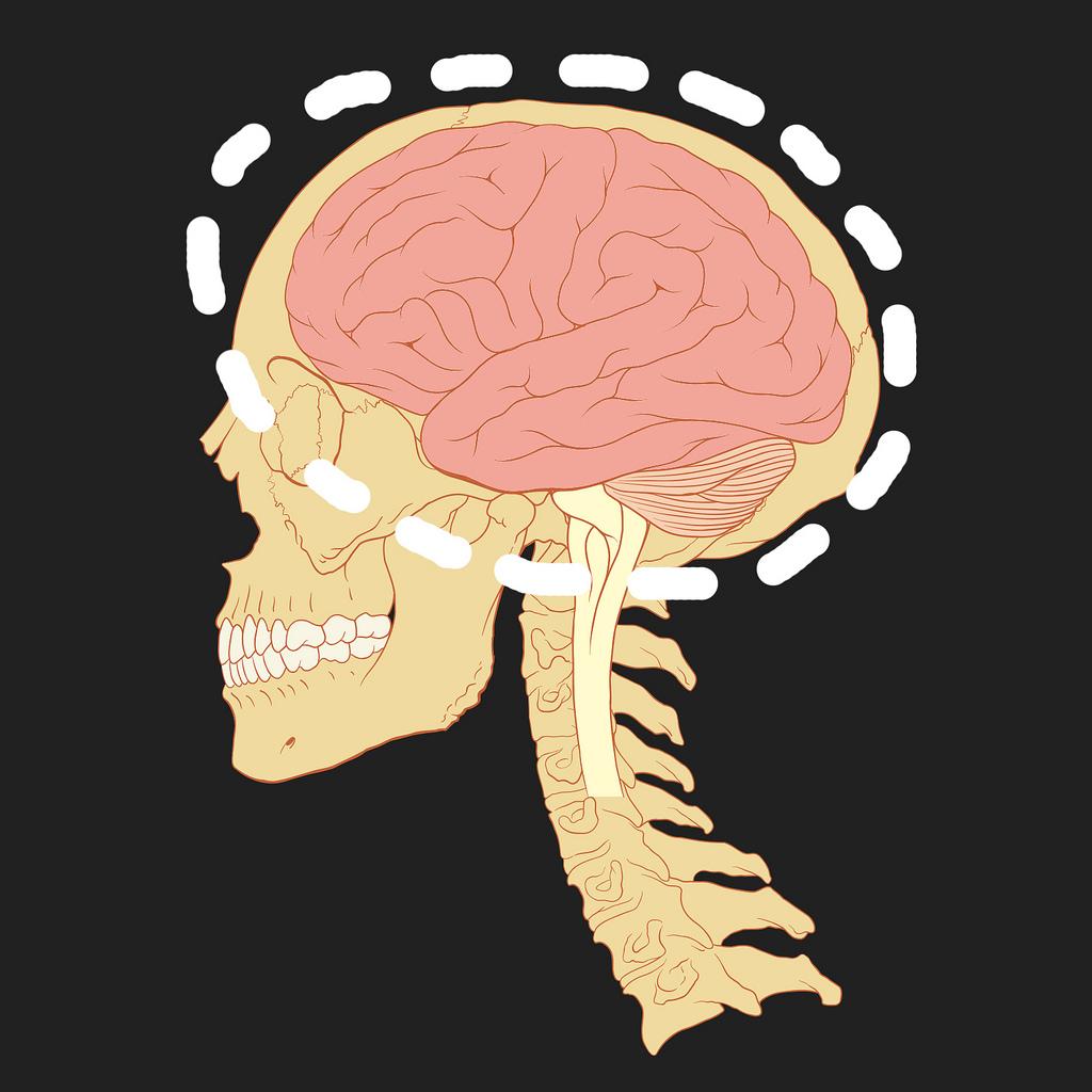 Nem só de massa cinzenta vive o nosso cérebro!